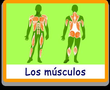 Resultado de imagen de juegos musculos online